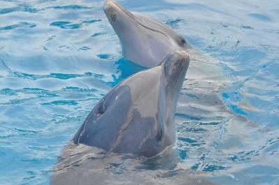 dolphin-989660_960_720