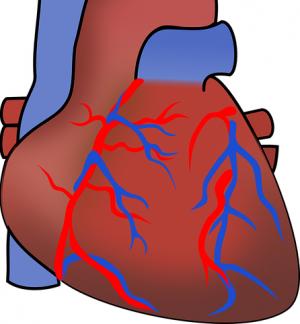 aorta-151145