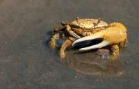 crab-79156_960_720